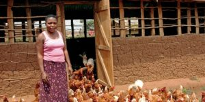 africa-poultry-farm